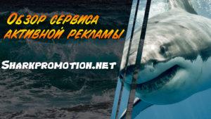 Обзор сервиса активной рекламы Sharkpromotion